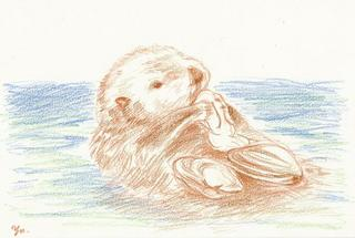 sea-otter_35%.jpg